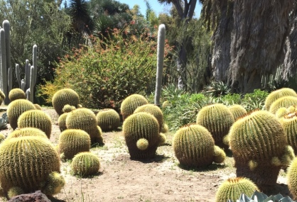 Attack of the Cactoids. Desert garden at the Huntington Library, Pasadena.